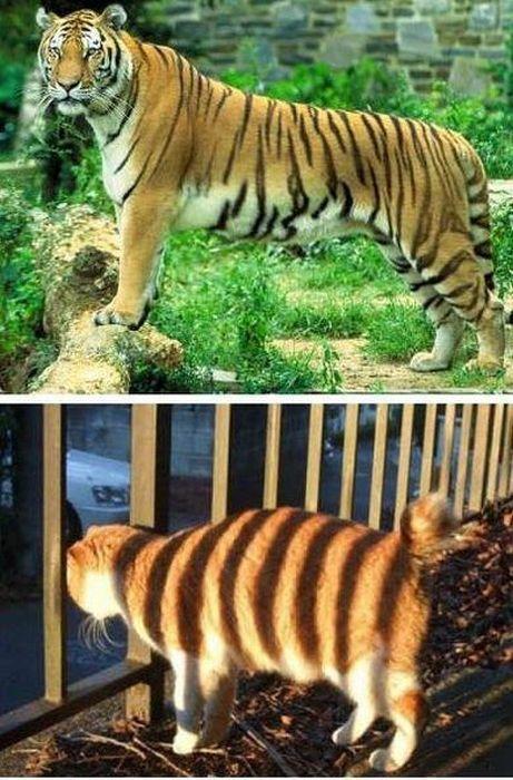 devenir-tigre-avec-les-ombres-dun-grillage