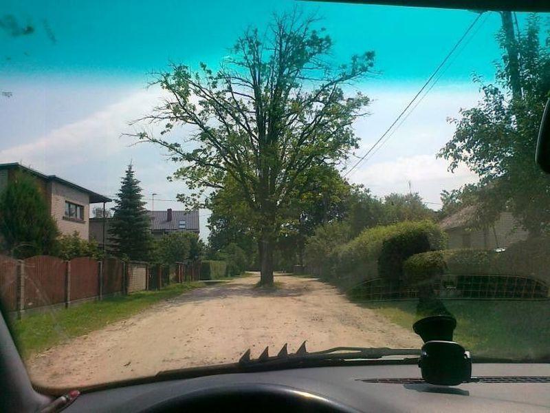 arbre-milieu-route-2