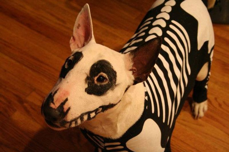chien-squelette