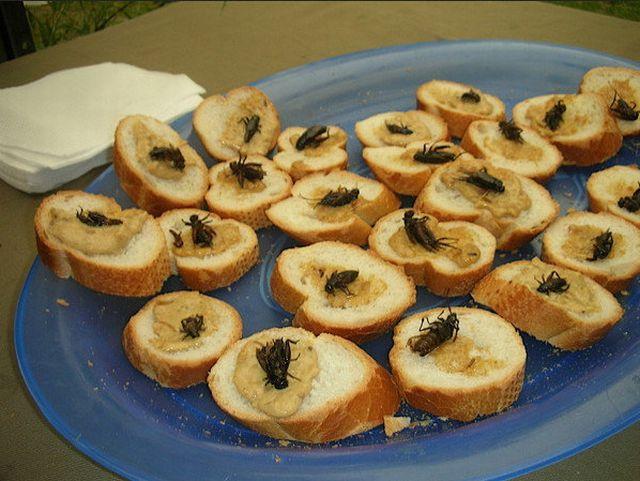aperitifs-avec-des-mouches
