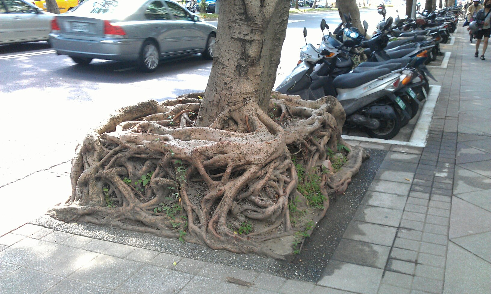 racines-encombrantes