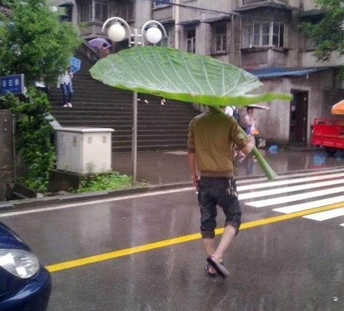 parapluie-naturel