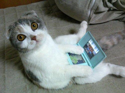 chat-qui-joue-nintendo-ds