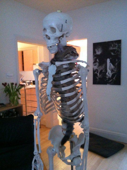 chat-dans-squelette-humain