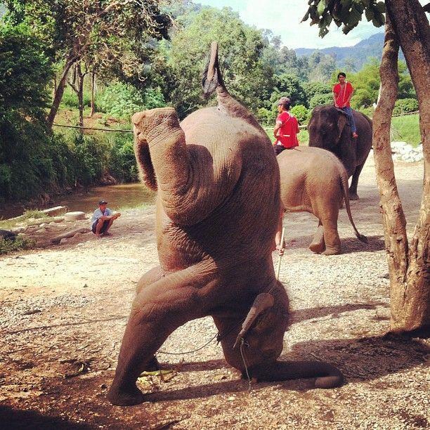 elehant-qui-fait-sport