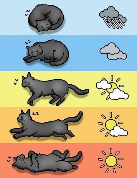 chat-meteo