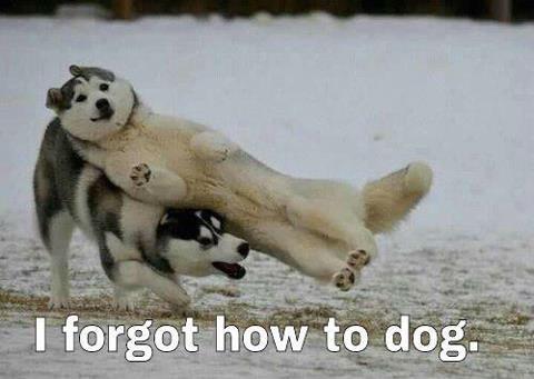 je-sais-plus-comment-faire-chien