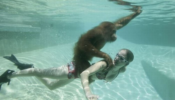 singe-sur-dos-dune-fille-piscine