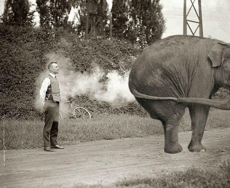 pet-elephant-gueule