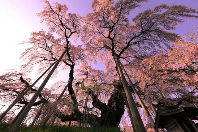 arbre-trop-lourd