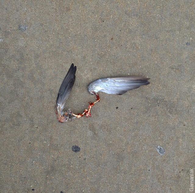 des-ailes-sans-oiseau-sol
