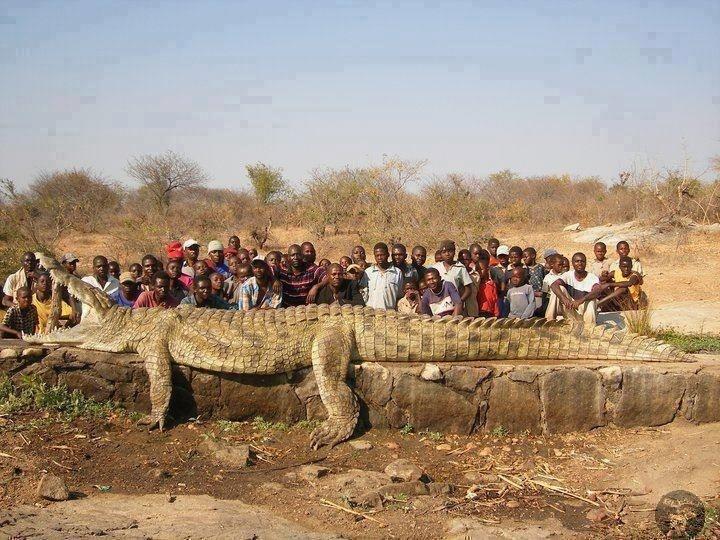 enorme-crocodile-caiman