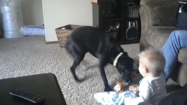 un chien veut jouer avec un b b qui rigole. Black Bedroom Furniture Sets. Home Design Ideas