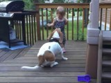 Un Basset Hound joue avec un enfant
