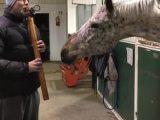 Un cheval qui aime le son de la flûte