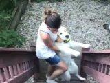 Un chien qui n'a pas envie de rentrer