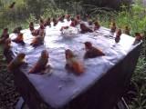 Colibri Piscine Party
