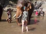 Un éléphant envoie valser une fille