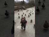 Un enfant chassé par des canards