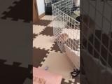 Un lapin s'échappe de sa cage