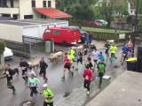 Des moutons dans la course Wings For Life