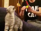 Pêcher un chat avec une crevette