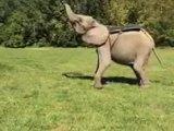 Salto avec l'aide d'un éléphant