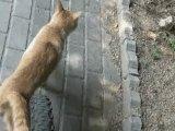 Tentative d'arnaque à l'assurance par un chat