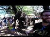 Une trompe d'éléphant dans la face